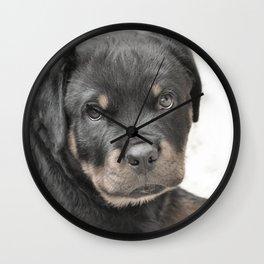 Rottweiler puppy Wall Clock
