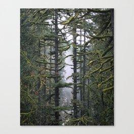 Trees 'n Fog Canvas Print
