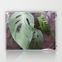Windowleaf Laptop & iPad Skin
