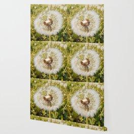 Dandelion spring flower Wallpaper