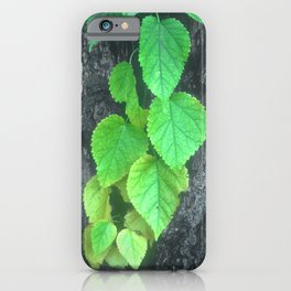Cascade of Green Leaves Growing on Tree Bark iPhone Case