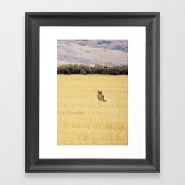Canidae Framed Art Print