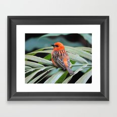 Bye Little Bird Framed Art Print