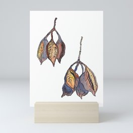 Kurrajong seed pods Mini Art Print