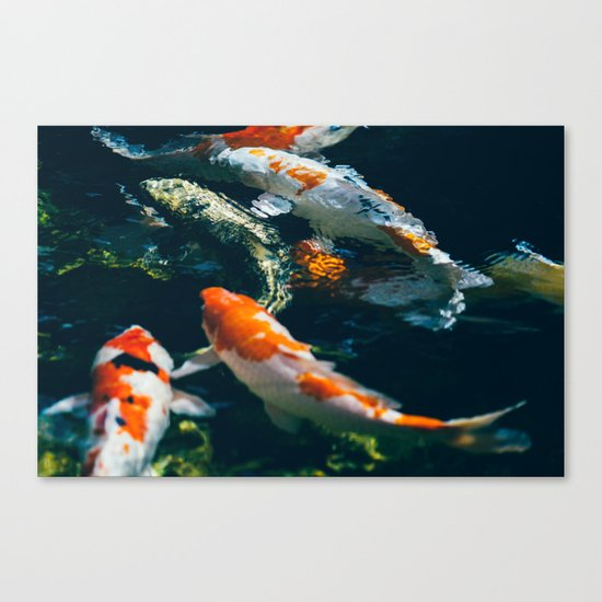 Koi Fish In Water Canvas Print