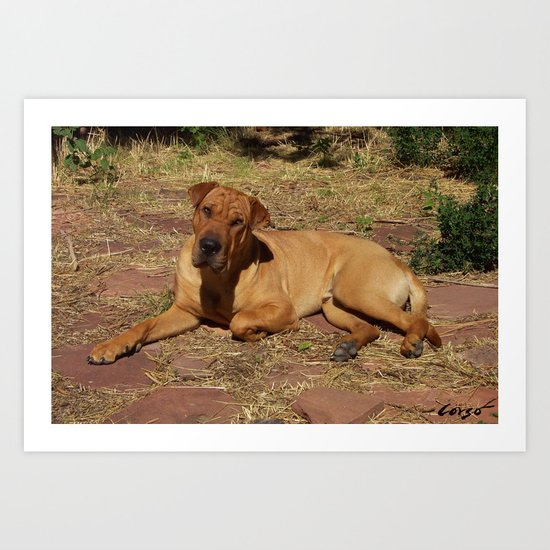 """Born Free"" from the photo series, ""My dog, PLaY-DoH"" Art Print"