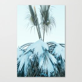 Palm and Snow Canvas Print