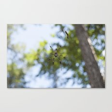 Spider 1 | Picture B Canvas Print