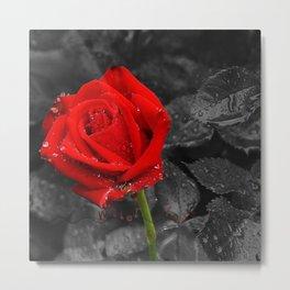 Water rose Metal Print