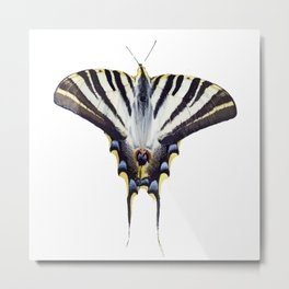 Scarce Swallowtail With Large Wingspan Vector Metal Print