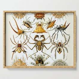 Haeckel Illustration Spiders Serving Tray