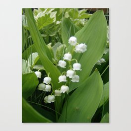 Pure White Lily of the Valley Flower Macro Photograph Canvas Print