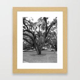 Old Oak Framed Art Print