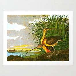 Long-billed Curlew Bird Art Print