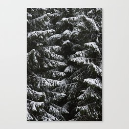 Melting of the snow in forest. Canvas Print