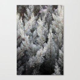 fractal magic Canvas Print