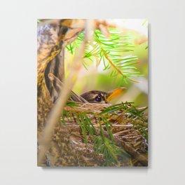 Baby Robin Bird Metal Print