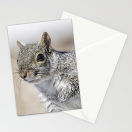 Wet paw Squirrel Stationery Cards