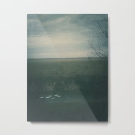 | formation of swans | Metal Print