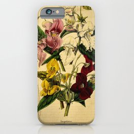Flower impatiens macrochila impatiens candida impatiens tricornis impatiens roylei4 iPhone Case