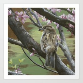 Sparrows of Spring 2 Art Print