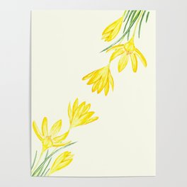 yellow botanical crocus watercolor Poster