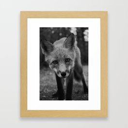 The Fox (Black and White) Framed Art Print
