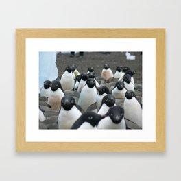 Adelie Penguins 2, Antarctica 2006 Framed Art Print