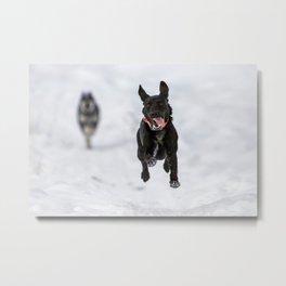 Dog Flying in Winter Metal Print