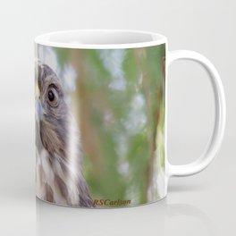 Hawk Eyes in the Willow Coffee Mug