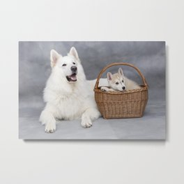 White dog and puppy in the basket Metal Print