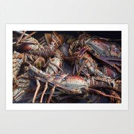 Lobsters, Anegada, BVI  Art Print