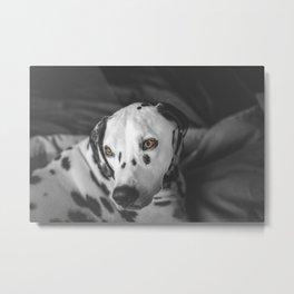 Snowflake the Dalmatian Metal Print