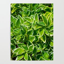 Leaves Abstract Poster