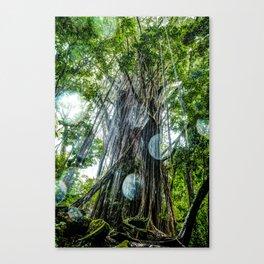 Rainy Day Under the Banyon Tree Canvas Print