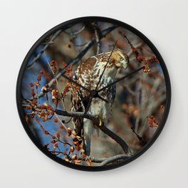 Rough Legged Hawk Wall Clock