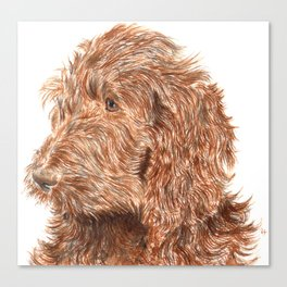 Chocolate Labradoodle Canvas Print