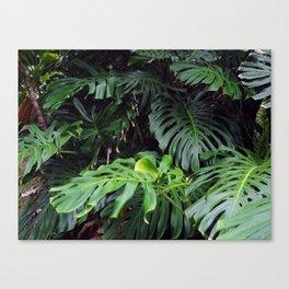 Hawaii Tropicals 02 Canvas Print
