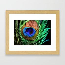 In the Peacock Mood Framed Art Print