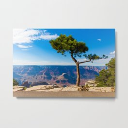 Grand Canyon pine tree Metal Print