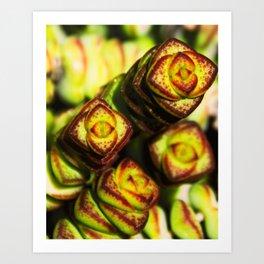succulent cactus II Art Print