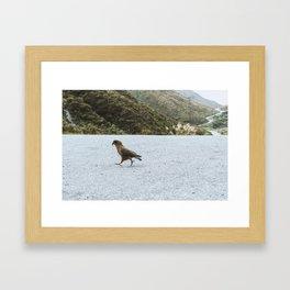 A cheeky Kea on a mission // New Zealand Framed Art Print