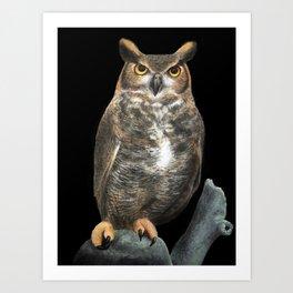 Superb Owl Sunday Art Print