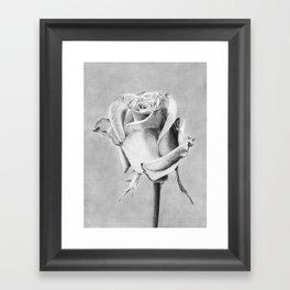 Rose Flower Framed Art Print