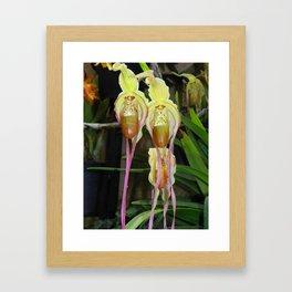 Lady Slipper Orchids Framed Art Print