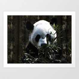 Chinese Giant Panda Bear Art Print