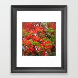Lush Blooms DPGSS170603d Framed Art Print