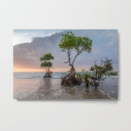 Mangrove Trees On The Beach At Sunset Metal Print