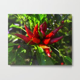 Red and Green Chili Peppers Metal Print