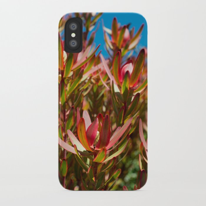 Leucadendron Jester iPhone Case